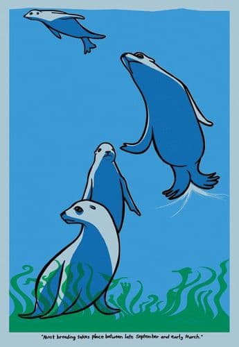 Swimming Seals Art Print 2007