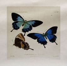 Blue Butterflies Butterfly Flying Insect Fabric Panel