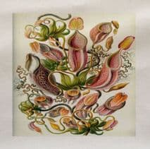 Fly Trap Plant Ernst Haeckel Printed Fabric Panel