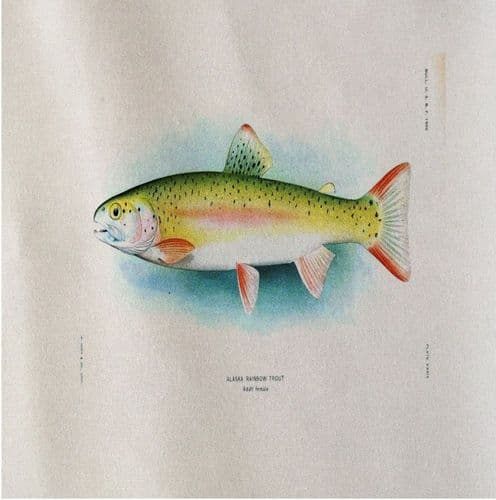 Rainbow Trout Fish Vintage Illustration - Fabric Panel