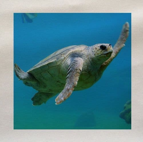 Sea Turtle Tortoise Ocean Under The Sea Fabric Panel