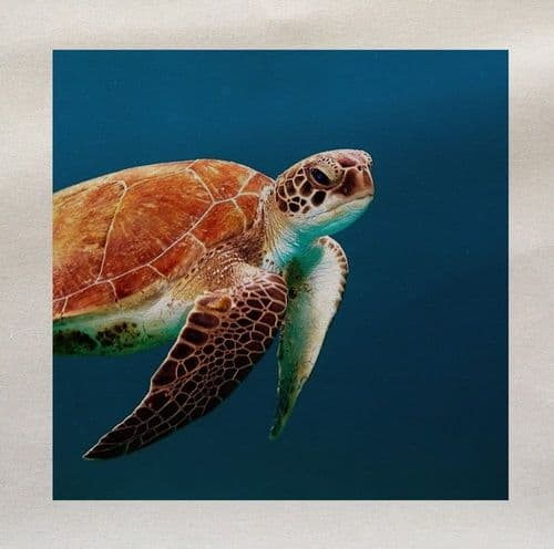 Tortoise Sea Turtle Ocean Under The Sea Fabric Panel