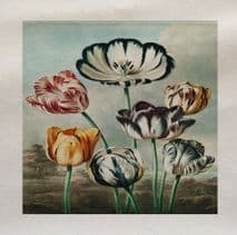 Tulips Flowers from The Temple of Flora Robert John Thornton Printed Fabric Panel