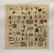 Vintage Insect Spiders Fly Printed Fabric Panel