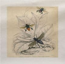 Vintage Insects Flys Printed Fabric Panel
