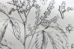 10th May 2021. Wood South African Botanical Prints