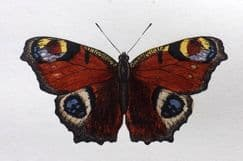 26th July 2021. Morris Butterfly Prints