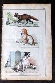 Adam White 1859 Hand Col Print. Fox, Spaniel, Bull Dog