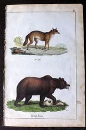 Adam White 1859 Hand Col Print. Jackal, Brown Bear