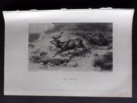 Aflalo 1898 Antique Print. Stag Hunting