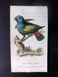 After George Edwards 1799 Hand Col Bird Print. Blue Headed Parrot