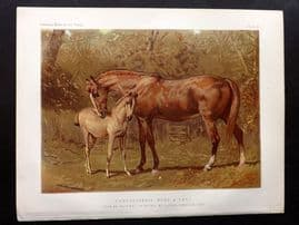 Sidney & Cassell 1881 Horse Print. Thoroughbred Mare & Foal