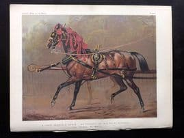 Sidney & Cassell 1881 Horse. A State Carriage Horse. Propert of Price of Wales