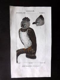Turpin C1820 Hand Col Bird Print. Great Harpy Eagle 09 REDUCED FROM £25