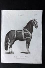 Wilkes C1810 Antique Print. Farriery - Bandages for External Maladies. Horse
