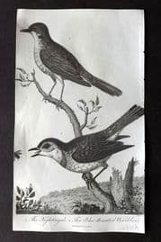 After George Edwards C1805 Antique Bird Print Nightingale, Blue Throated Warbler
