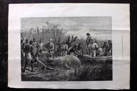 ILN 1880 Antique Print. Hippopotamus Hunting in Angola, West Africa