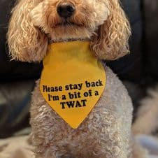 Personalised Dog Bandana - Warning message