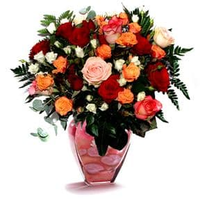 Mixed Roses -you are my rainbow !!