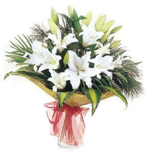 White Lilly's